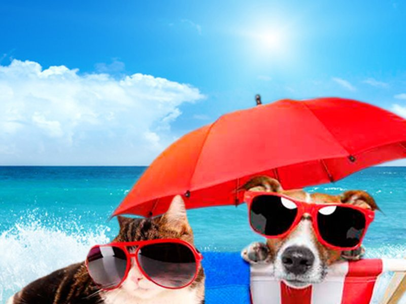 Travel with your pet Magic Cristal Park Hotel Benidorm