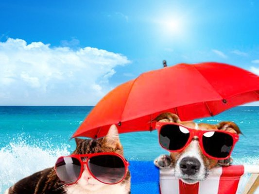 Holidays with your pet magic cristal park hotel benidorm